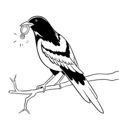 magpie bird with golden ring coloring vector image