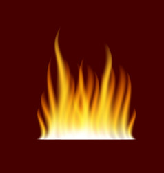 realistic burning fire flame template vector image