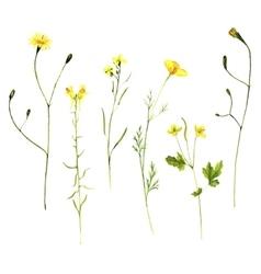 Set watercolor drawing plants vector