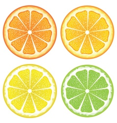 Various Citrus Slices2 vector image
