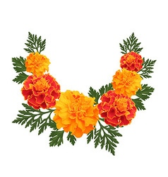 Marigolds on white background vector