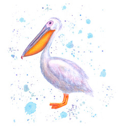 Pelican watercolor hand drawn white bird with vector
