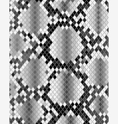 skin of snake vector image