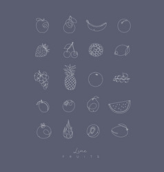 pen line fruits icons grey vector image vector image