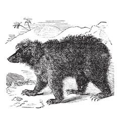 Asian bear vintage engraving vector image