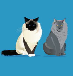 Birman cat and maine coon set vector