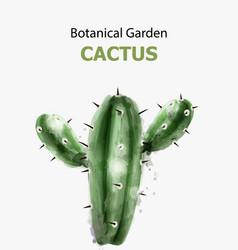cactus watercolor isolated botanic garden vector image