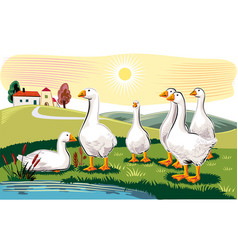 Geese in a meadow near a pond vector