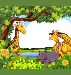 Giraffes and hippo pond vector