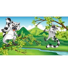Two playing animals vector image