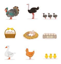 farm birds grown for meat and for laying eggs vector image vector image