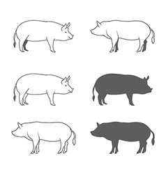 Set of Pig Isolated on White Background vector image