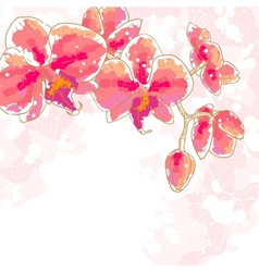 Branch of orchids on white background vector