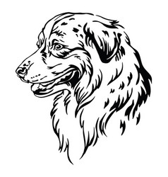 Decorative portrait australian shepherd vector