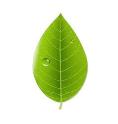 Eco Green Leaf vector image vector image