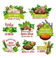 Herbs natural spices and farm market seasonings vector
