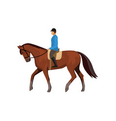 Male jockey riding horse isolated against white vector