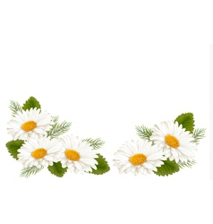 Nature background with white beautiful flowers vector image