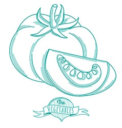 Outline hand drawn sketch of tomato flat style vector image