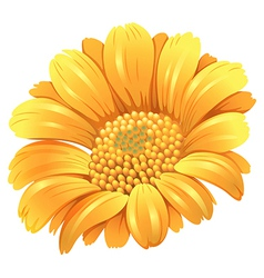 A fresh blooming flower vector