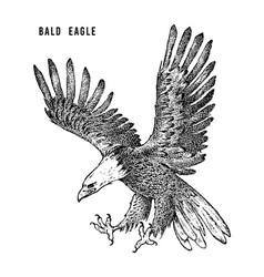 Bald eagle wild forest bird prey hand drawn vector