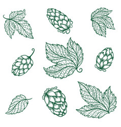 detailed hops sketch icons vector image