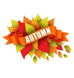 Fall leave with ribbon banner vector