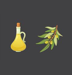 set olives fruit olive oil bottle and branch vector image