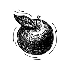Black sketch drawing of apple vector