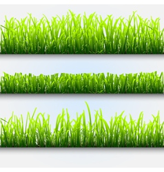 Green grass for design vector