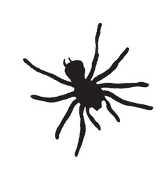 spider silhouette on a white background vector image