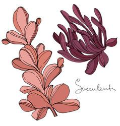 Succulent floral botanical flower engraved vector