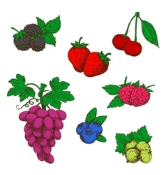 Wild forest and garden fruits colored sketches vector image