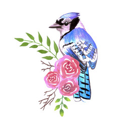 Blue jay bird with red roses and twigs watercolor vector