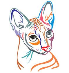 Colorful decorative portrait sphynx cat vector