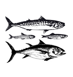 hand drawn ocean sea fishes such vector image