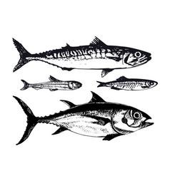 hand drawn ocean sea fishes vector image