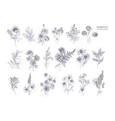 Set beautiful floristic flowers flowering vector