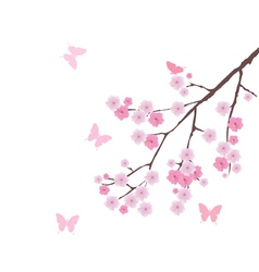 blooming cherry branch vector image vector image