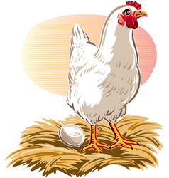 hen has laid her egg vector image vector image