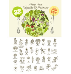 big set of hand drawn vegetables vector image