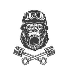 Ferocious gorilla head in biker helmet vector