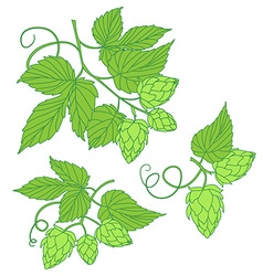 Hops icon or logo ideal for beer stout a vector image