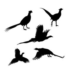 Bird pheasant silhouettes vector image vector image