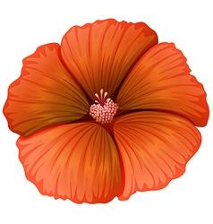 A blooming orange flower vector