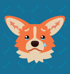 corgi dog emotional head of vector image