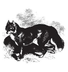 Dingo vintage vector