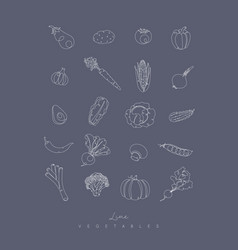 pen line vegetables icons grey vector image