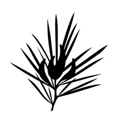 rooibos vector image
