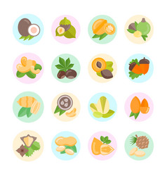 Set flat icons nuts vector